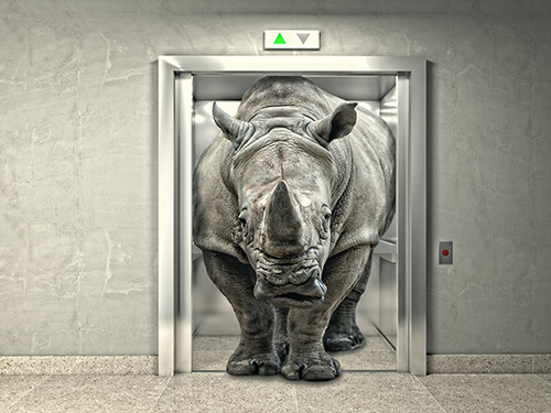 classic elevator and wild rhino